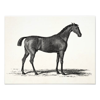 Vintage 1800s English Race Horse - Racing Horses Photographic Print