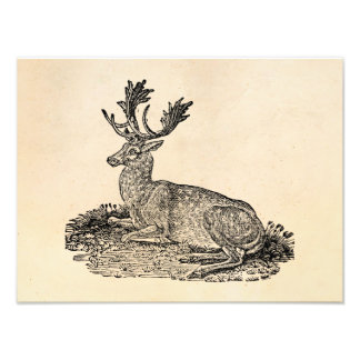 Vintage 1800s Fallow Deer Illustration Template Photo