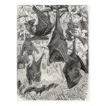 Vintage 1800s Flying Fox Bat Retro Template Bats Post Cards