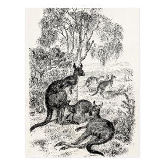 Vintage 1800s Giant Kangaroos Australian Kangaroo Postcard