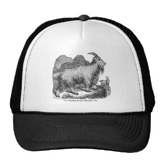 Vintage 1800s Goats American Rocky Mountain Goat Cap