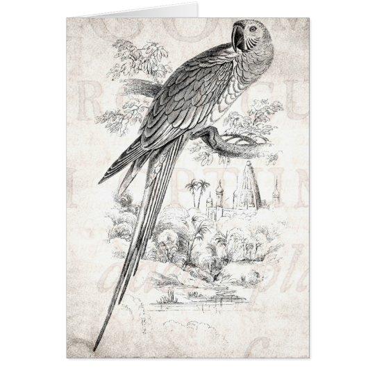 Vintage 1800s Great Green Macaw Bird Maccaw Birds Card