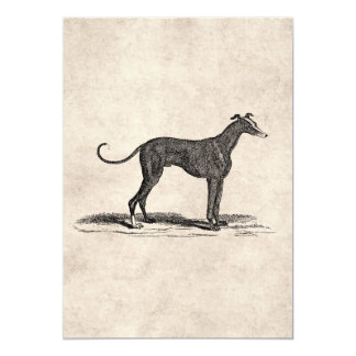 Vintage 1800s Greyhound Dog Illustration - Dogs 13 Cm X 18 Cm Invitation Card
