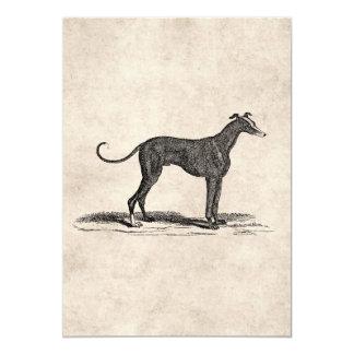 Vintage 1800s Greyhound Dog Illustration - Dogs Card