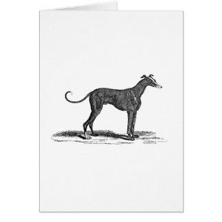 Vintage 1800s Greyhound Dog Illustration - Dogs Note Card