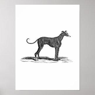 Vintage 1800s Greyhound Dog Illustration - Dogs Poster