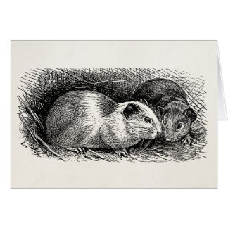 Vintage 1800s Guinea Pig Illustration Retro Cavies Card
