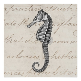 Vintage 1800s Hawaiian Sea Horse Illustration Poster