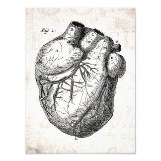Vintage 1800s Heart Retro Cardiac Anatomy Hearts Photo Art