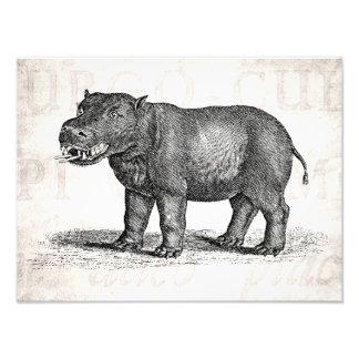Vintage 1800s Hippopotamus Illustration - Hippos Photo Print