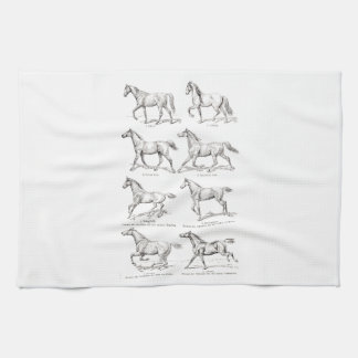 Vintage 1800s Horse Gaits Illustration Horses Tea Towel