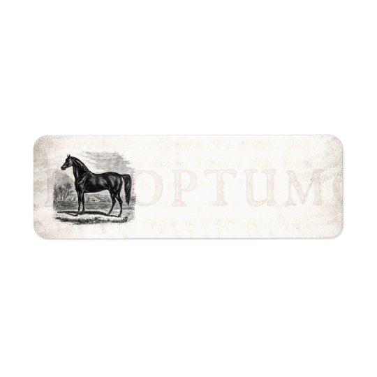 Vintage 1800s Horse - Morgan Equestrian Template