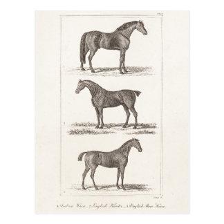 Vintage 1800s Horse Old Breeds Arabian Hunter Race Postcard