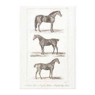 Vintage 1800s Horse Old Breeds Arabian Hunter Race Stretched Canvas Print