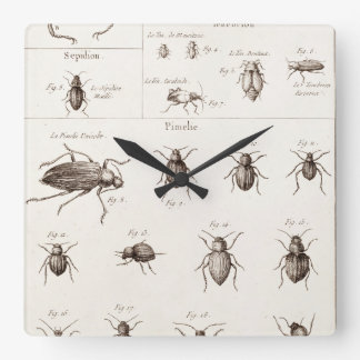 Vintage 1800s Insects Bugs Beetles Illustration Wall Clocks