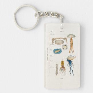 Vintage 1800s Jellyfish Illustration - Jelly Fish Key Ring