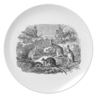 Vintage 1800s Kangaroo - Australian Kangaroos Plate