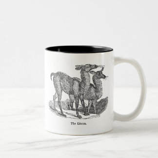 Vintage 1800s Llama Illustration Llamas Template Two-Tone Coffee Mug