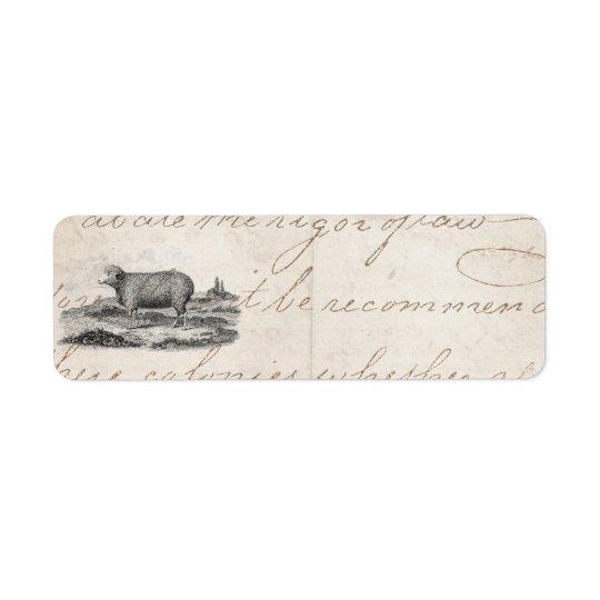 Vintage 1800s Merino Sheep Ewe Lamb Template