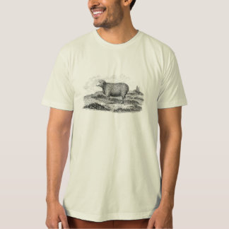 Vintage 1800s Merino Sheep Ewe Lamb Template T-Shirt
