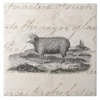 Vintage 1800s Merino Sheep Ewe Lamb Template Tile