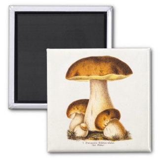 Vintage 1800s Mushroom Edible Mushrooms Template Magnet