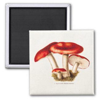 Vintage 1800s Mushroom Red Mushrooms Template Magnet