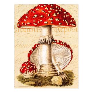 Vintage 1800s Mushroom Red Mushrooms Template Postcard