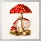 Vintage 1800s Mushroom Red Mushrooms Template Poster