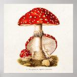 Vintage 1800s Mushroom Red Mushrooms Template Posters