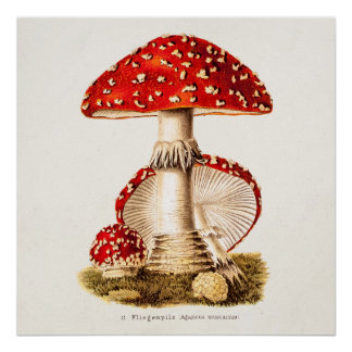 Vintage 1800s Mushroom Red Mushrooms Template Poster