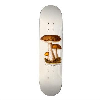 Vintage 1800s Mushroom Scaber Brown Mushrooms Skate Decks