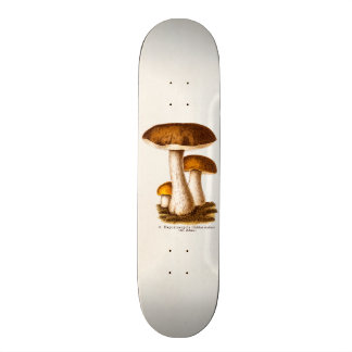 Vintage 1800s Mushroom Scaber Brown Mushrooms Skateboards