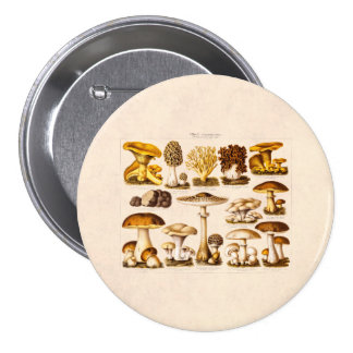 Vintage 1800s Mushroom Variety  Mushrooms Template 7.5 Cm Round Badge