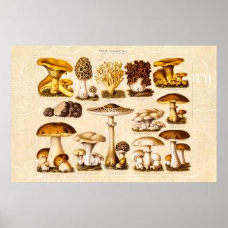 Vintage 1800s Mushroom Variety  Mushrooms Template Posters