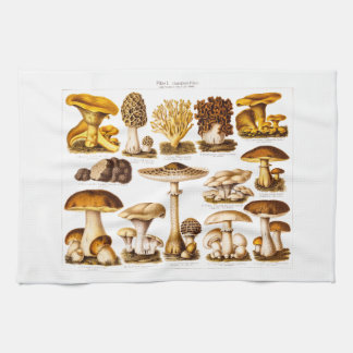 Vintage 1800s Mushroom Variety  Mushrooms Template Tea Towel