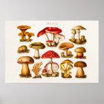 Vintage 1800s Mushroom Variety Red Mushrooms
