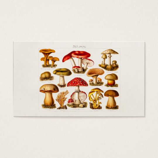 Vintage 1800s Mushroom Variety Red Mushrooms Business Card