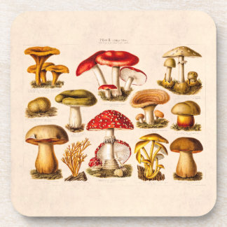 Vintage 1800s Mushroom Variety Red Mushrooms Coaster