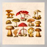 Vintage 1800s Mushroom Variety Red Mushrooms Poster