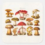 Vintage 1800s Mushroom Variety Red Mushrooms Square Sticker