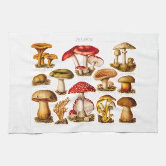 Vintage 1800s Mushroom Variety Red Mushrooms Tea Towel