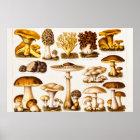 Vintage 1800s Mushroom Variety Template Poster