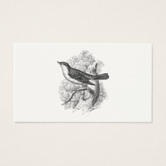 Vintage 1800s Nightingale Bird Illustration Birds