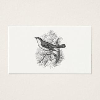 Vintage 1800s Nightingale Bird Illustration Birds Business Card