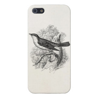 Vintage 1800s Nightingale Bird Illustration Birds iPhone 5/5S Cover
