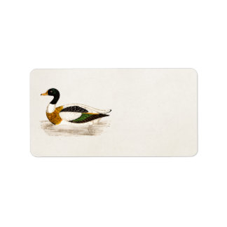 Vintage 1800s Old Drake Duck Illustration - Ducks Label