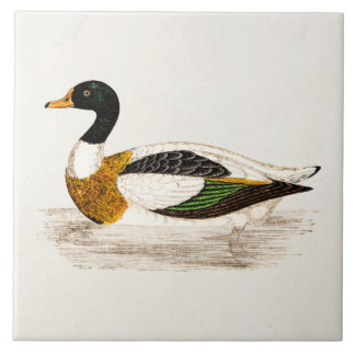 Vintage 1800s Old Drake Duck Illustration - Ducks Tile