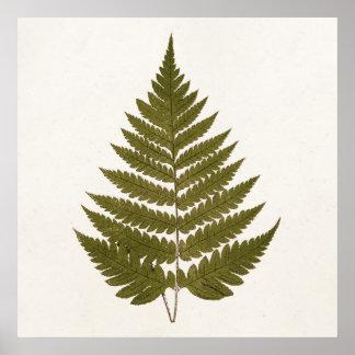 Vintage 1800s Olive Green Fern Leaf Template Poster