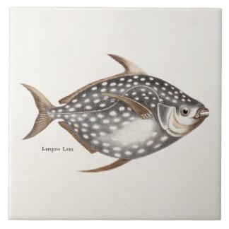 Vintage 1800s Opah Moonfish Fish Old Lampris Luna Large Square Tile